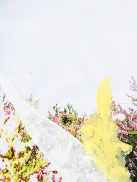 'Heide' 2013 - acryl op beschilderde print